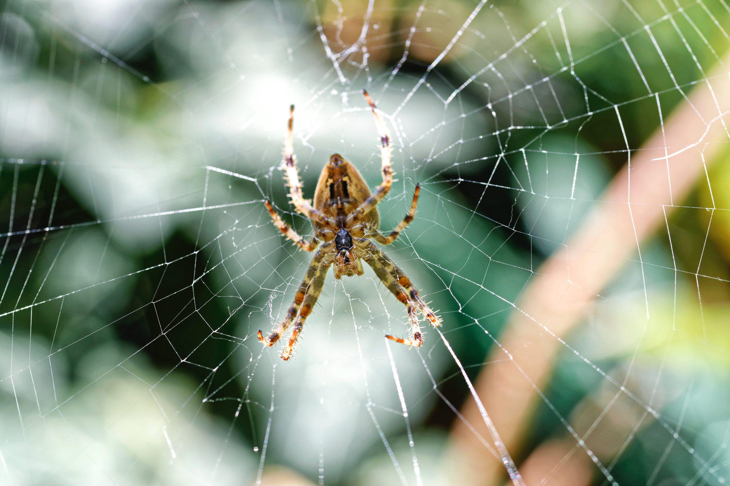 Giải mã giấc mơ thấy con nhện