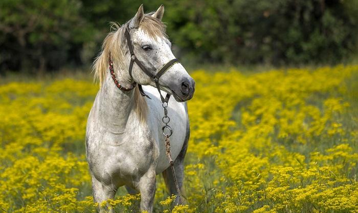 Mơ thấy ngựa đánh con gì chắc chắn trúng thưởng lớn?