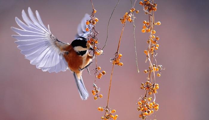 Có ý nghĩa thế nào khi mơ thấy chim – Thông điệp từ giấc mơ chim