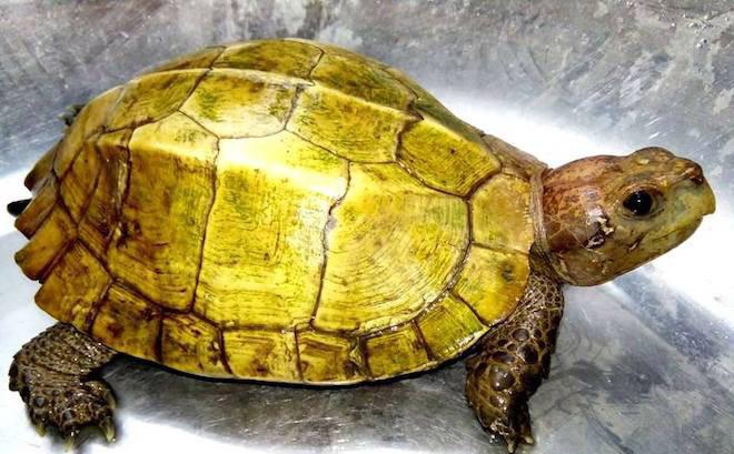 Mơ thấy rùa vàng có ý nghĩa gì, đánh lô đề bao nhiêu