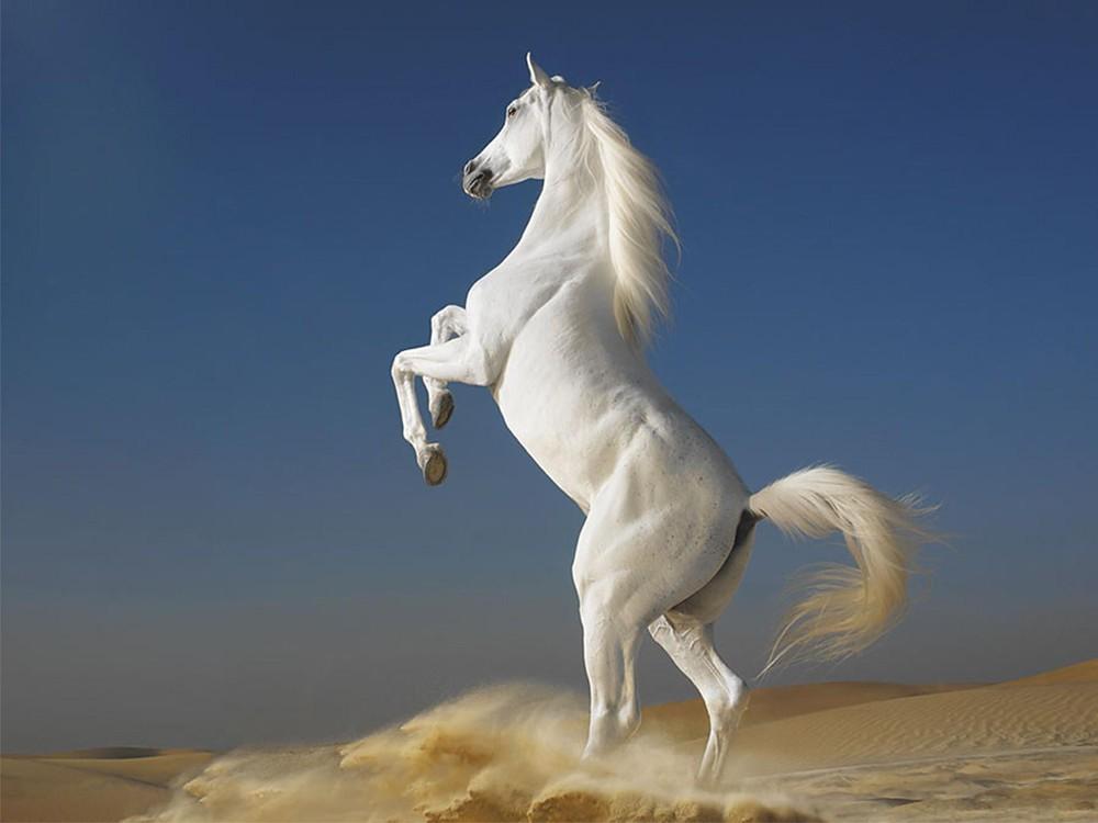 Giải mã giấc mơ về con ngựa – Mơ thấy ngựa là tốt hay xấu?