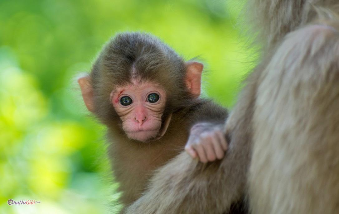 Mơ thấy con khỉ đánh số mấy, điềm báo của giấc mơ thấy con khỉ