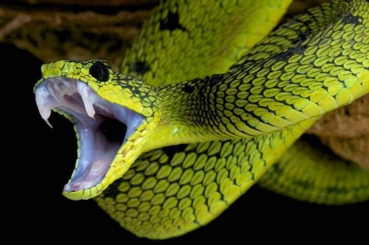 Nằm mơ thấy rắn có điềm báo gì, đánh số mấy?